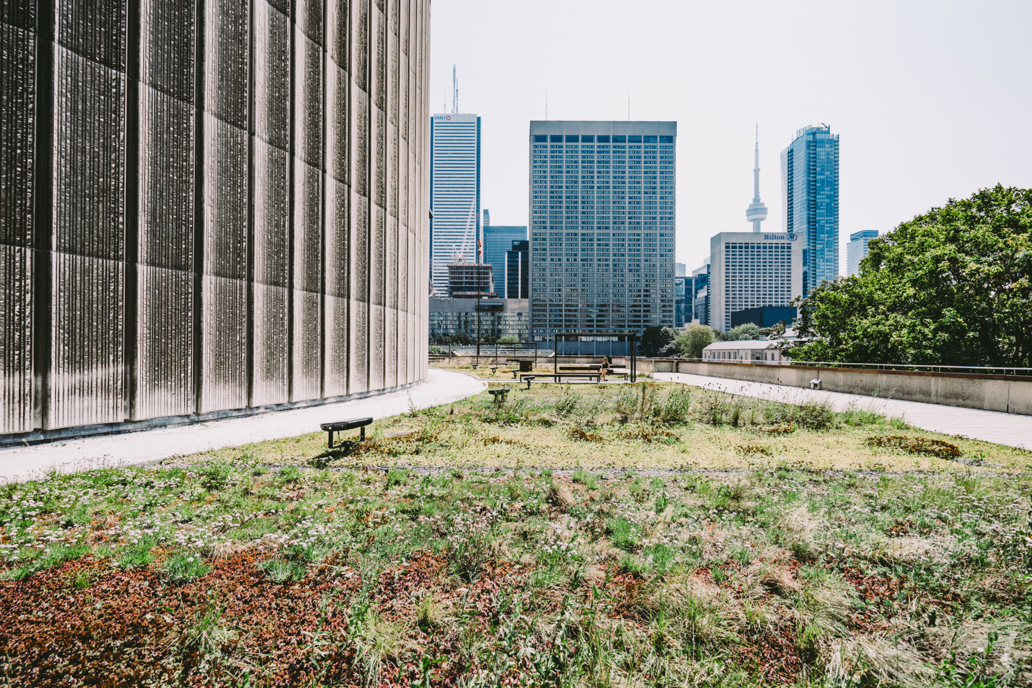 Even on Toronto City Hall's Green Roof can you find the CN Tower
