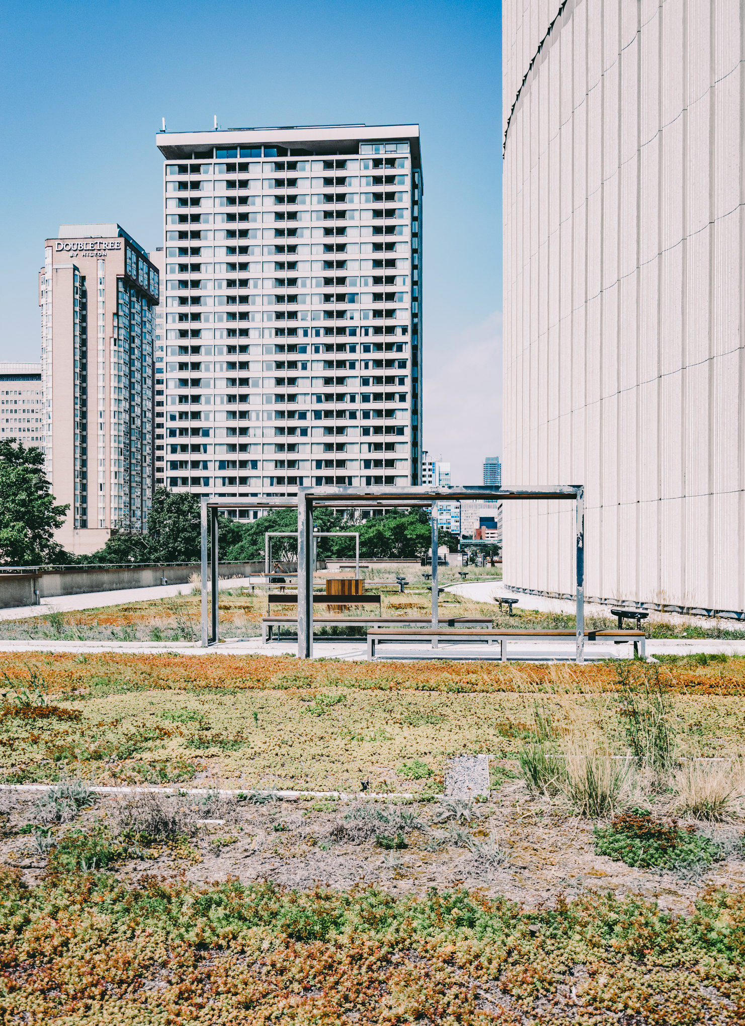 People can relax and read up on the Green Roof at City Hall Toronto